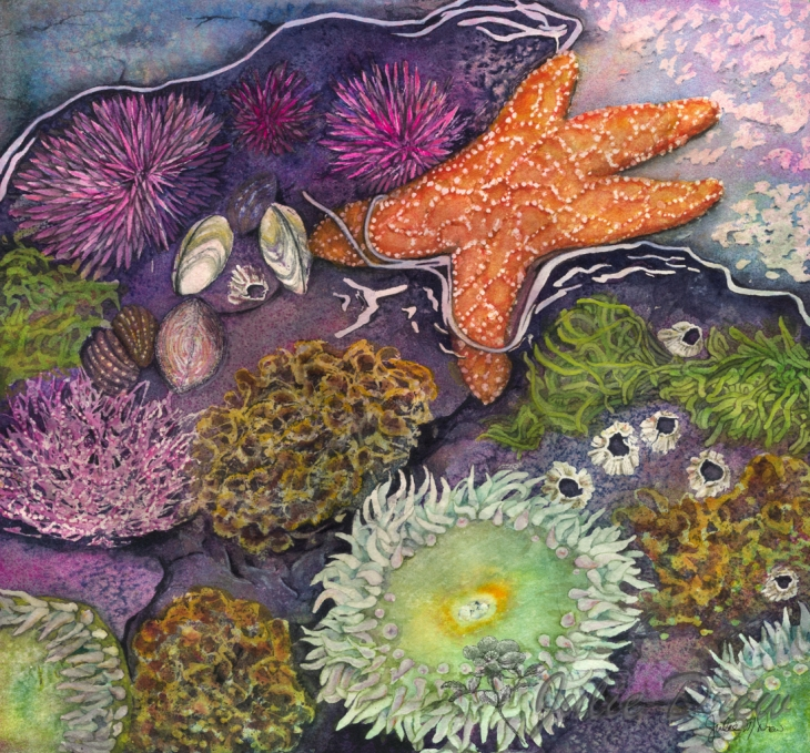 Watercolor painting process of Wonders of the Sea